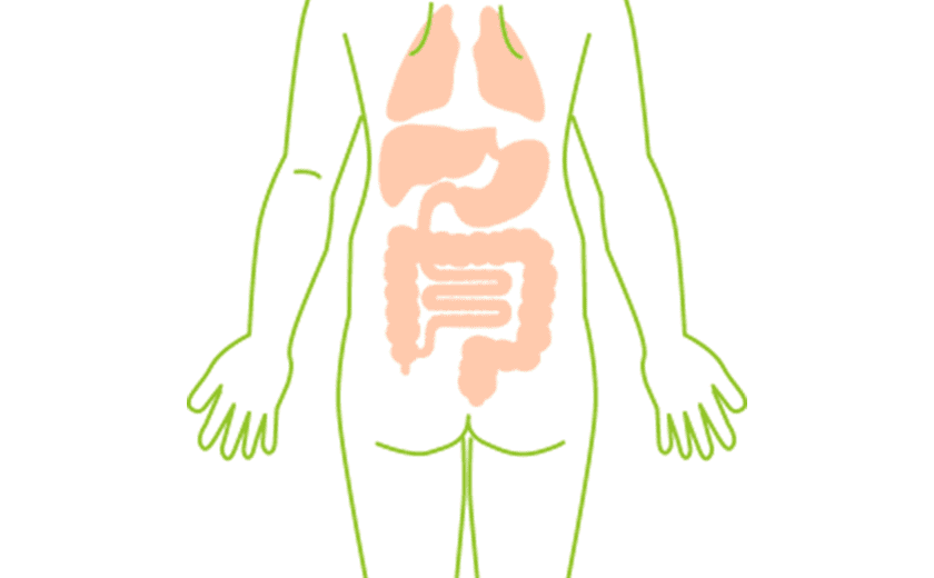 内臓への美容鍼灸